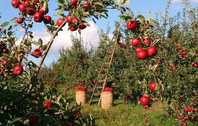 posao u svajcarskoj u vocnjaku