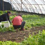 Posao u inostranstvu POLJOPRIVREDA – potrebni radnici – poslovi BERBE, SADNJE, RAD NA FARMI