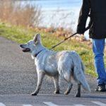 POSLOVI U AMERICI – POSAO ŠETANJE PASA – 20 DOLARA NA SAT !!! – Potrebni ljudi za posao šetanje pasa