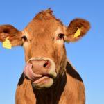 HITNO potrebni Pomoćni – Fizički radnici u mlekari u Nemačkoj – PLATA I USLOVI RADA PO NEMAČKIM PROPISIMA !
