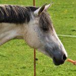 POSAO NA FARMI U INOSTRANSTVU – Potrebni radnici za rad na farmi konja – Rad u prijatnoj i opuštenoj atmosferi