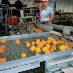 POSAO U ŠVAJCARSKOJ – Oba pola – Rad u fabrici hrane – 21,50 CHF po satu – NE TREBA iskustvo