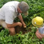 POSLOVI NEMACKA – POSAO U BAŠTI – Potrebni ljudi za održavanje bašte i zelenih površina