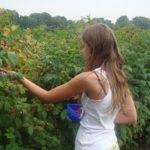 SEZONSKI POSAO U INOSTRANSTVU – SVI PASOŠI !!! Potrebni radnici za branje voća – SRB, MAK, BiH, HR
