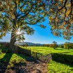 POSAO NA FARMI U NEMAČKOJ – POTREBNI RADNICI NA FARMI SVINJA – POSAO ZA SVE PROFILE RADNIKA