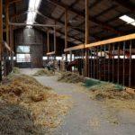 POSAO NA FARMI NEMAČKA – Potrebno pet radnika – Besplatan smeštaj – Hranjenje živitinja i čišćenje