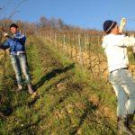 POSLOVI INOSTRANSTVO – POSAO U ŠPANIJI – Potrebni radnici za posao ODRŽAVANJE ZELENIH POVRŠINA