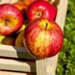 Posao u inostranstvu – rad u voćnjaku – branje – više slobodnih mesta
