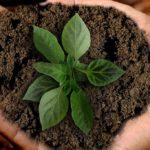 POSAO BAŠTOVANA – POSAO U NEMAČKOJ – 14€ satnica – potrebni pomoćni radnici i vrtlari