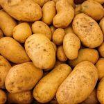 POSAO INOSTRANSTVO – Sortiranje krompira – Potrebni radnici – SVI PASOŠI